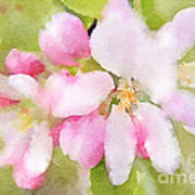 Apple Blossom Watercolour Poster