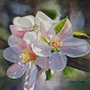 Apple Blossoms In Sunlight Poster