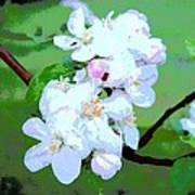 Apple Blossoms In The Spring - Painting Like Poster