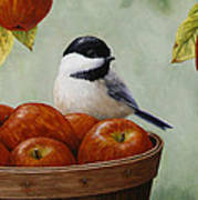 Apple Chickadee Greeting Card 1 Poster