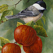 Apple Chickadee Greeting Card 2 Poster