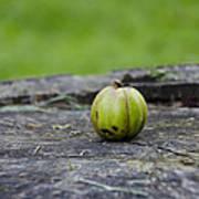 Apple Gourd Poster