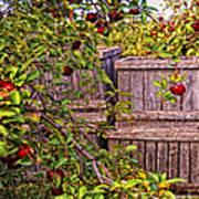 Apple Orchard Harvest Poster