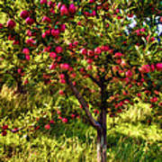 Apple Orchard II Poster