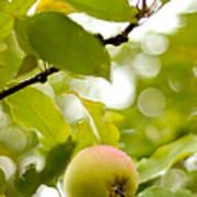 Apple Taste Of Summer 2 Poster