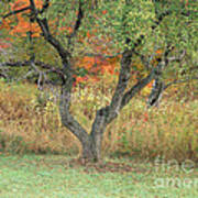 Apple Tree In Autumn Poster