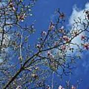 April Blossom Poster