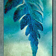 Aqua Fern Poster