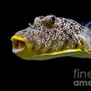 Aquarium Fish Poster