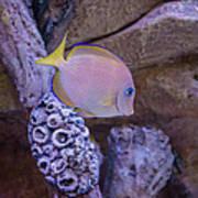 Aquarium Impression Poster