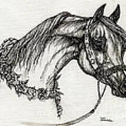 Arabian Horse Drawing 22 Poster