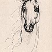 Arabian Horse Drawing 25 Poster