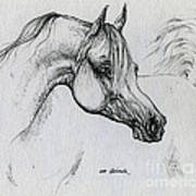 Arabian Horse Drawing 28 Poster