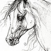 Arabian Horse Drawing 49 Poster
