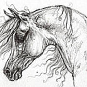 Arabian Horse Drawing 53 Poster