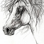 Arabian Horse Drawing 54 Poster