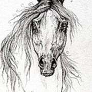 Arabian Horse Drawing 55 Poster
