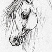 Arabian Horse Drawing Poster
