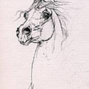Arabian Horse Portrait 2014 02 25 Poster