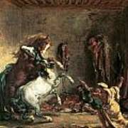 Arabian Horses Fighting In A Stable Poster