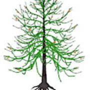 Araucaria Prehistoric Tree Poster
