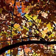 Arboretum Fall Poster