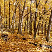 Arboretum Trail Poster