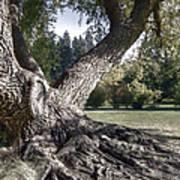 Arboretum Tree Poster by Daniel Hagerman