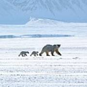 Arctic Family Poster
