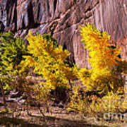 Arizona Autumn Colors Poster