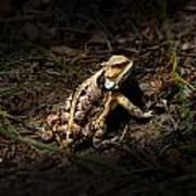 Arizona Horned Lizard Poster
