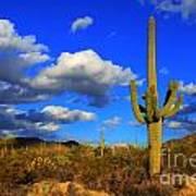 Arizona Landscape 2 Poster