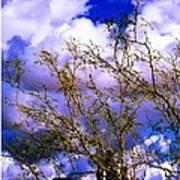 Arizona Mesa Through A Mesquite Tree Poster
