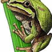 Arizona Tree Frog Poster