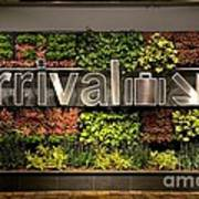 Arrival Sign Arrow And Flowers At Singapore Changi Airport Poster