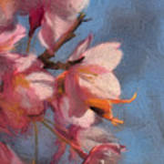 Artisic Painterly Cherry Blossoms Spring 2014 Poster