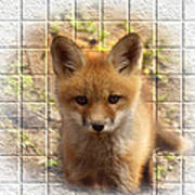 Artistic Cute Kit Fox Poster