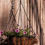 Artistic Hanging Basket Of Petunias Poster