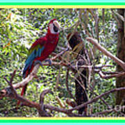 Artistic Wild Hawaiian Parrot Poster