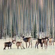 Caribou And Trees Poster