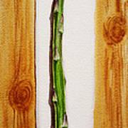 Asparagus Tasty Botanical Study Poster