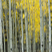 Aspen Abstract  Poster