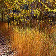 Aspen And Grass Poster