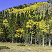 Aspen Foliage Poster by Tom Wilbert