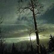 Aspen In Moonlight Poster