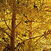 Aspen Leaves Textured Poster