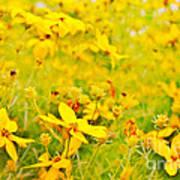 Aspen Sunflower Poster