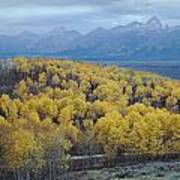 Aspens And The Tetons Poster