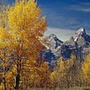 1m9353-aspens In Autumn And The Teton Range - V Poster