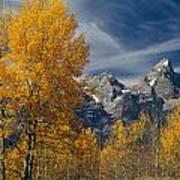 1m9352-aspens In Autumn And The Teton Range Poster